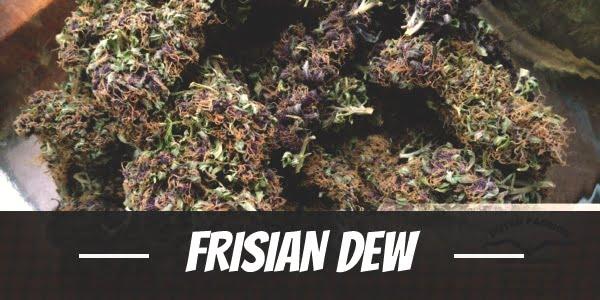 Frisian Dew