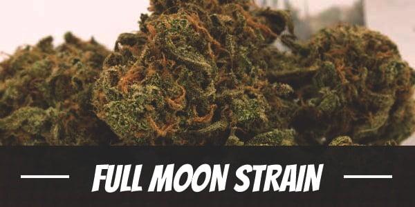 Full Moon Strain