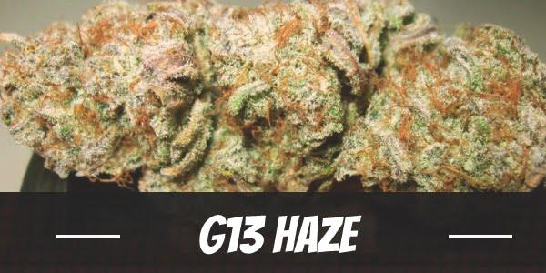 G13 Haze