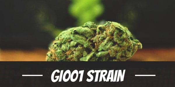 GI001 Strain