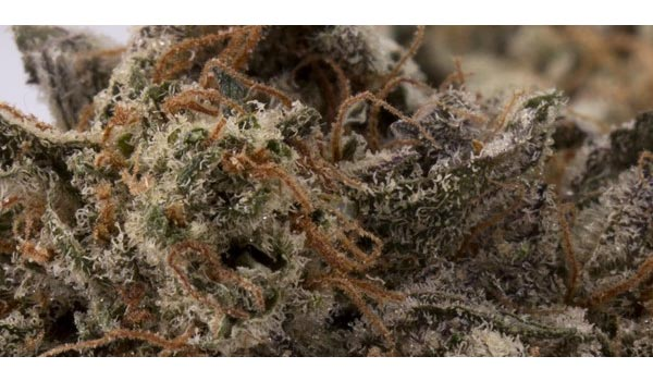 Girl Scout Cookies Strain Adverse Reactions