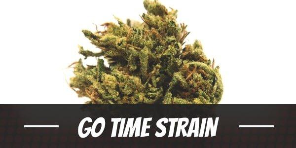 Go Time Strain
