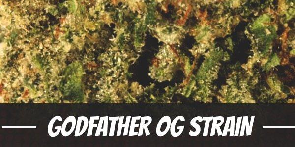 Godfather OG Strain