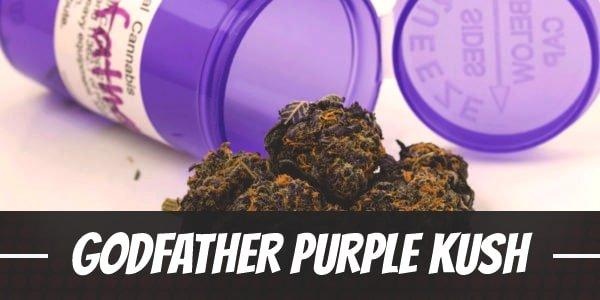 Godfather Purple Kush