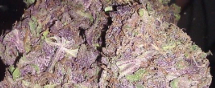 Godfather Purple Kush Adverse Reaction