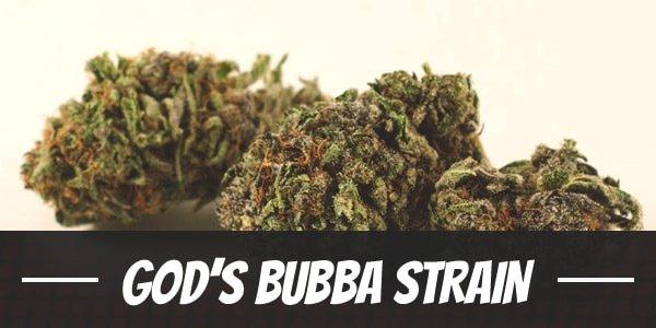 God's Bubba Strain