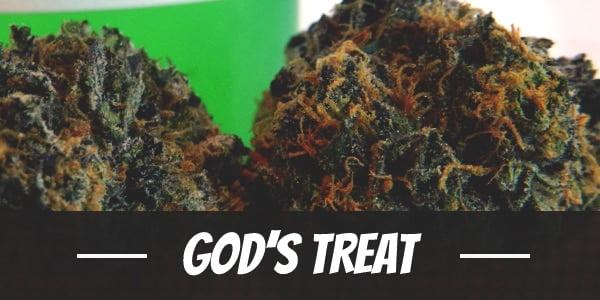 God's Treat