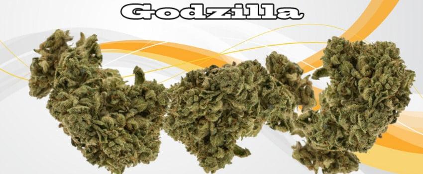 Godzilla Adverse Reaction