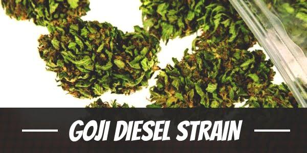 Goji Diesel Strain