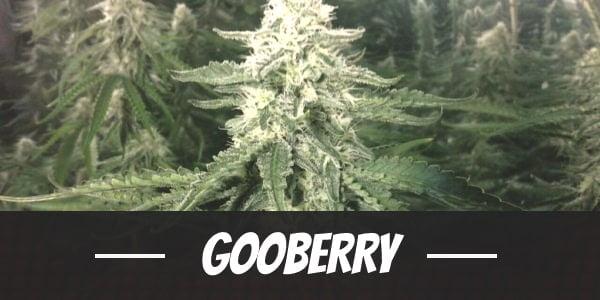 Gooberry