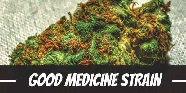 Good Medicine Strain