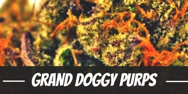 Grand Doggy Purps
