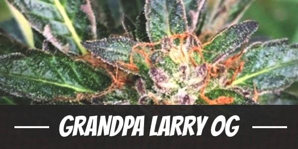Grandpa Larry OG