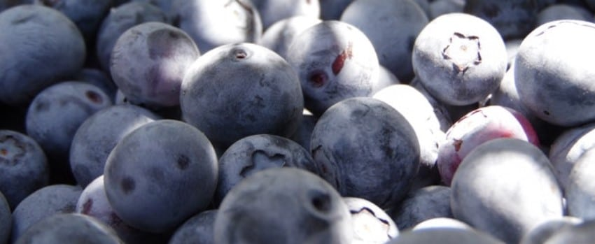Grape Ape Strain & Blueberries