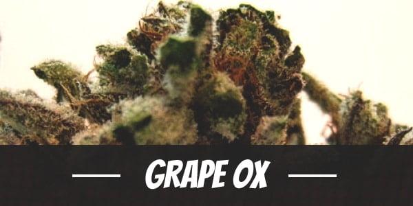 Grape OX