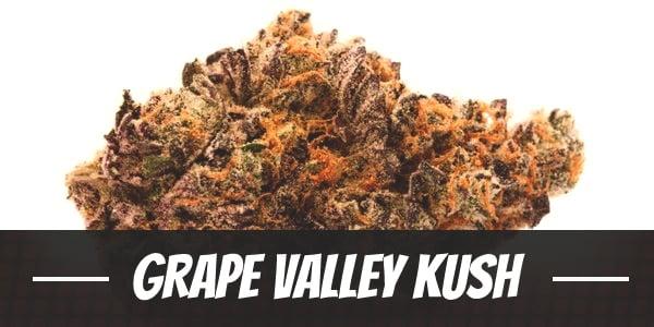 Grape Valley Kush
