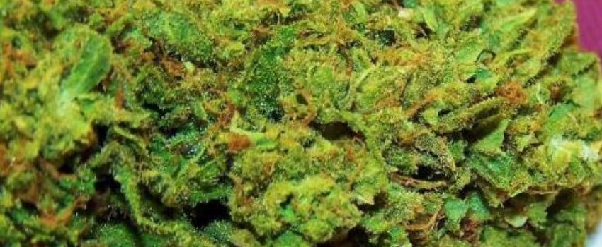 Green Kush Adverse Reaction