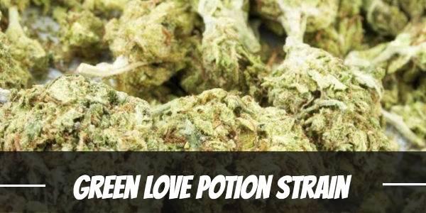 Green Love Potion Strain