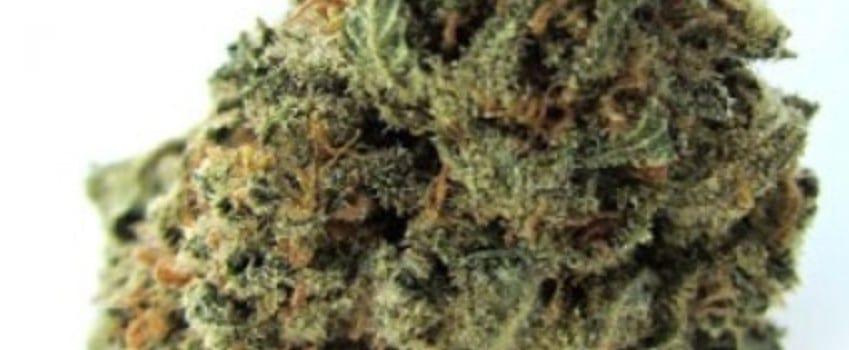 Green Python Medical
