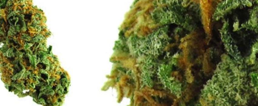 Green_Ribbon_Medical