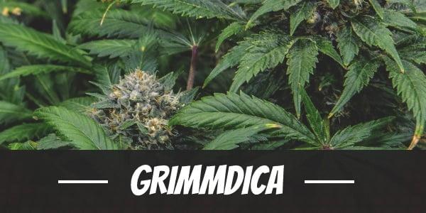 Grimmdica