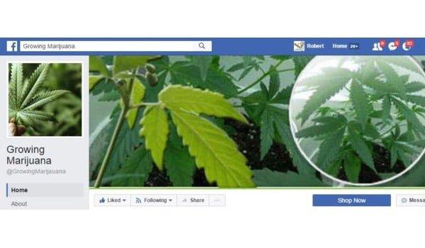 Growing Marijuana Facebook Page