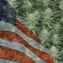 Growing Marijuana In Florida