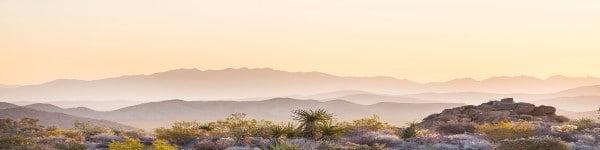 Growing Marijuana in Arizona