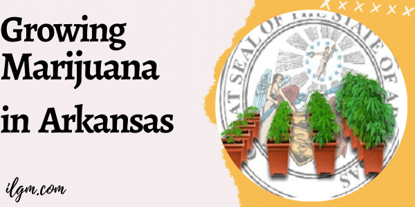 Growing Marijuana in Arkansas