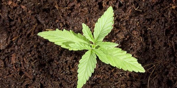 Growing in soil