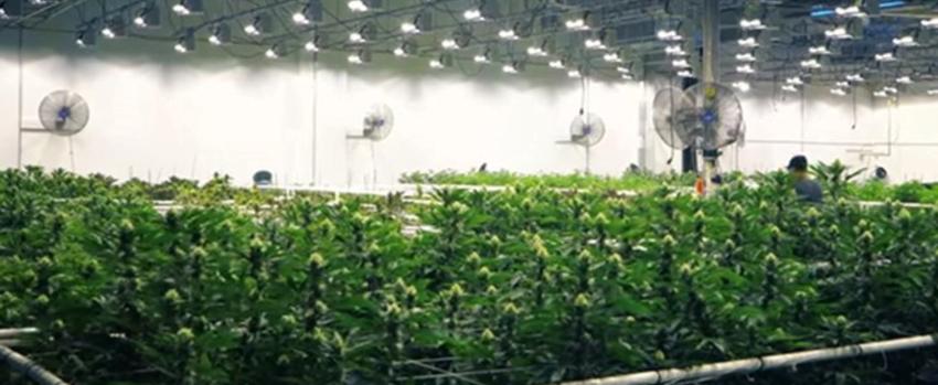growing marijuana sc