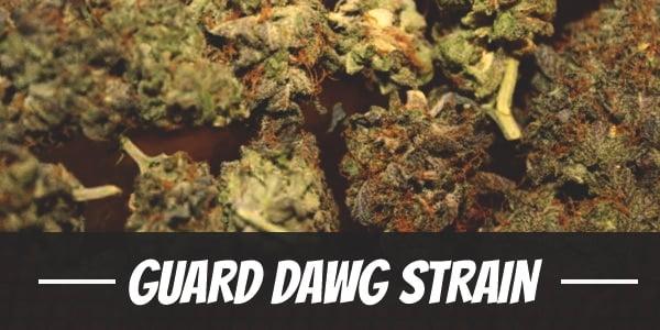 Guard Dawg Strain