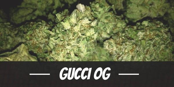 Gucci OG