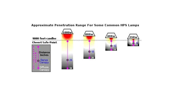 Different HPS lamps with distance for best yield