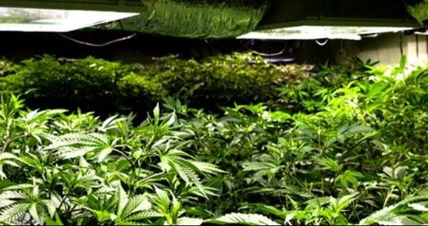 HPS grow light during vegetative stage