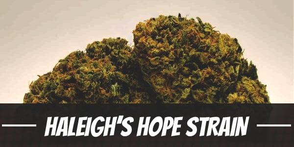 Haleigh's Hope Strain