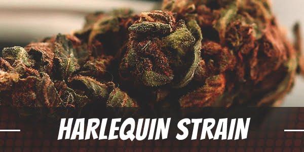 Harlequin Strain