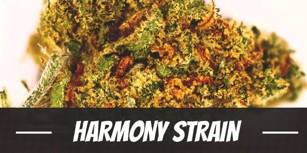 Harmony Strain