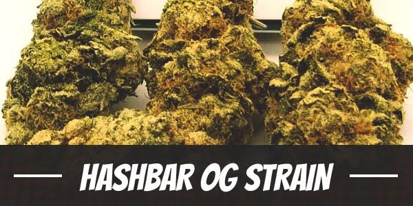 Hashbar OG Strain