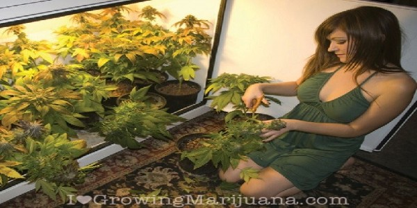 Have a good time growing cannabis indoors