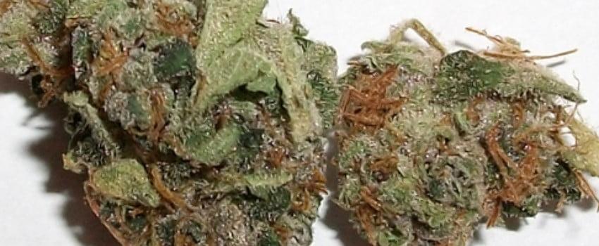 Hawaiian Purple Kush Medical
