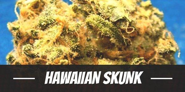 Hawaiian Skunk