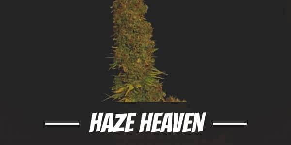 Haze Heaven