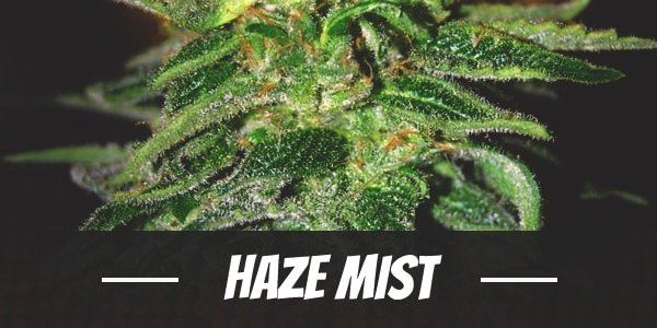 Haze Mist