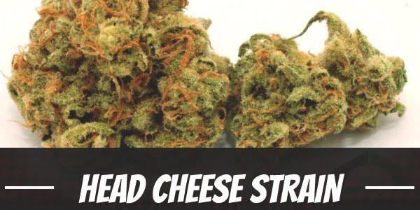Head Cheese Strain