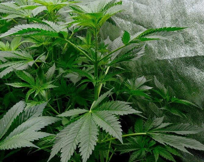 Healthy green plant