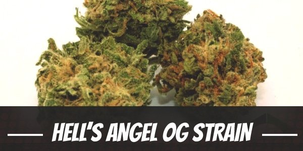 Hell's Angel OG Strain