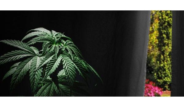 Hiding cannabis outdoor