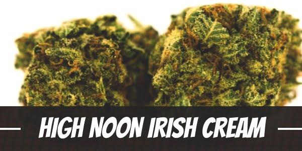High Noon Irish Cream