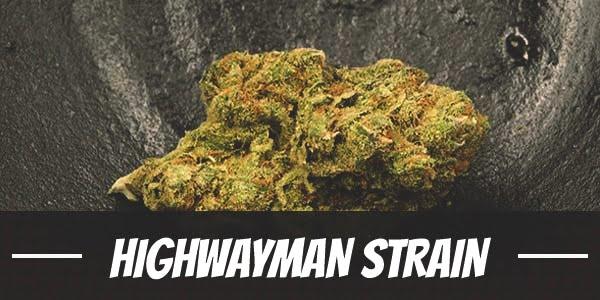 Highwayman Strain